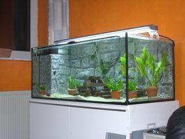 La puesta en marcha y cuidado del acuario de agua dulce Plantas