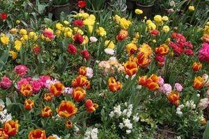 Cómo utilizar Gatorade como fertilizante