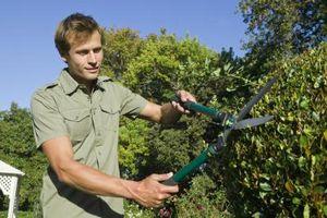 Después de podar arbustos, debe usted Abono?