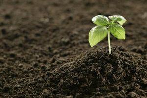 Crecimiento y desarrollo de una planta de frijol con luz controlada