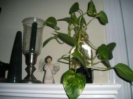 Cómo decorar con plantas de la casa