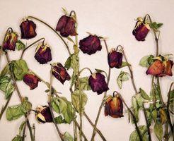 Arrancarán Rosas asesinato asesino?