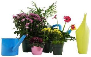 Remedios caseros para revivir plantas moribundas