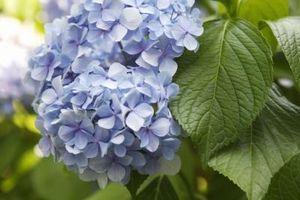 Las mejores flores para plantar en Virginia Occidental