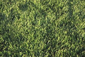 Cómo aplicar fertilizantes en Wet Grass