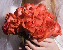 Herramientas para la eliminación de las espinas en las rosas