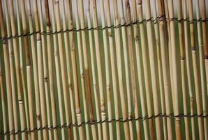 Tipos de bambú Esgrima