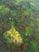 Cómo limpiar las algas de amarillo una piscina de agua salada