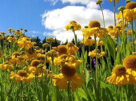 Historia y significado de las flores