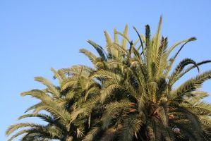 ¿Cómo puedo cubrir una Sombrilla para el patio con el corte de hojas de palma?