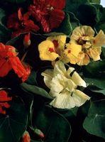 La longevidad de las flores, vegetales y hierbas Semillas