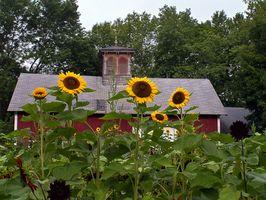 Flores para plantar en un jardín de flores que se ponen muy alto