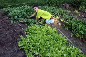 ¿Qué tipo de suelo que se utilizará para un jardín de verduras