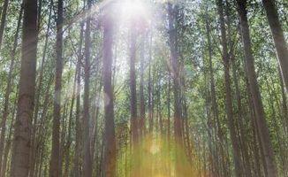 Importancia de las plantas de los ecosistemas forestales