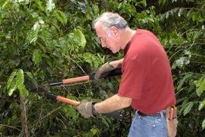 Cómo evitar que los lechones árbol
