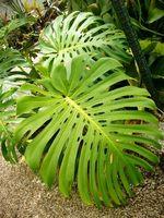 ¿Cómo puedo hacer crecer tropical Casa de las plantas?