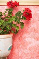 ¿Cómo hacer crecer una planta en la pared