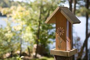 ¿Qué se puede usar para la limpieza alimentadores del pájaro?