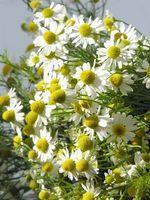 Acerca de Producción de Flores y Hierbas