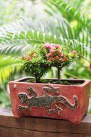 Cómo cuidar los mini rosas como plantas de interior