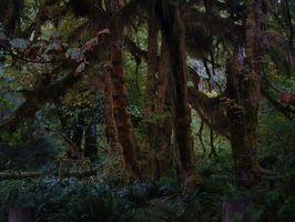 Las plantas que crecen en los bosques tropicales