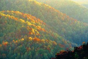 Las plantas nativas de Tennessee