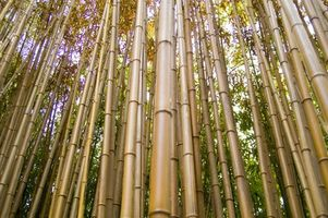 Cómo instalar bambú Haga clic Suelos