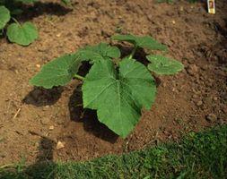 Nivel de pH puede afectar los niveles de potasa en el suelo?