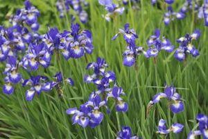 ¿Qué tipo de flores crecerán en Pensacola, Florida?