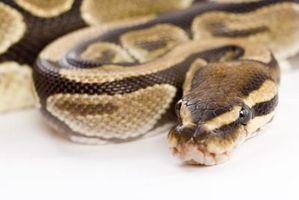 Las serpientes en el noreste de Missouri