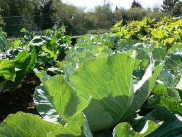 La hidroponía vs. Métodos de cultivo tradicionales