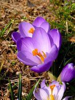 Tipos de flores que afectan el estado de ánimo de la gente y Olor
