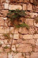 Cómo dejar de malas hierbas que crecen entre los ladrillos