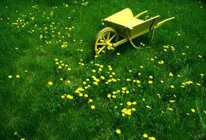 Las malas hierbas del césped del sur comunes
