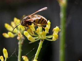 Usos de la cera de abejas pura