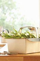 ¿Cuánto se debe regar las plantas de frijol?
