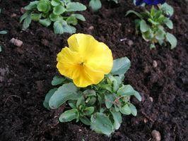 Las partes de una flor en el interior y el exterior