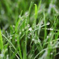 ¿Cuándo es demasiado tarde para una planta de hierba?
