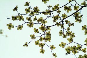 De hoja ancha árboles florecientes