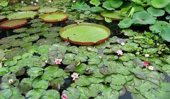 Diferentes tipos de plantas que se encuentran en un hábitat de la charca