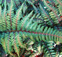 Las plantas que crecen con poca luz y alta humedad