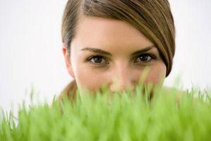 ¿Cómo hacer crecer hierba de trigo en su oficina