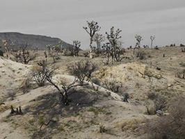 Las plantas y arbustos del desierto
