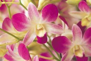 No puedo recortar tallos de orquídeas cuando florece se caen de las plantas?