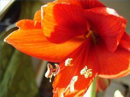 Partes de una flor Generalizado