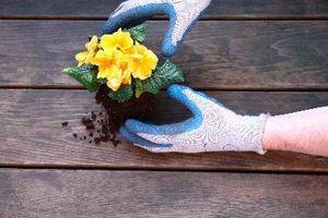 Las desventajas de la plantación de un jardín