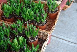 Plantas en Macetas cubierta con sol
