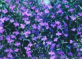 Las mejores plantas anuales para Sunny Ventana Cajas