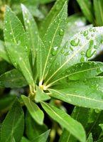 Problemas con el olor del suelo en las plantas de interior