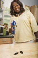 Las cucarachas pueden vivir en una cocina limpia?